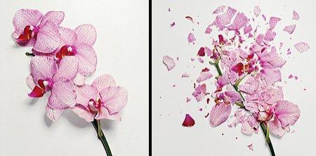 """Ai văzut vreodată o floare ...SPARTĂ? Uite cum arată """"frumuseţea ciobită"""""""