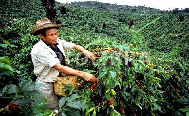 Columbia: Ciocniri între cultivatorii de cafea şi poliţie în timpul unui protest