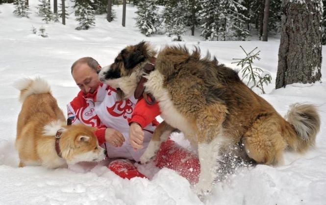 Vladimir Putin, doborât de doi câini fioroşi. Vezi ce a păţit liderul rus în timpul unei şedinţe foto