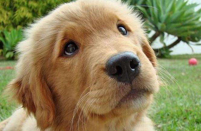 Proiect controversat al Primăriei Bucureşti. Toţi posesorii de câini, OBLIGAŢI să sterilizeze căţeii mai mari de şase luni