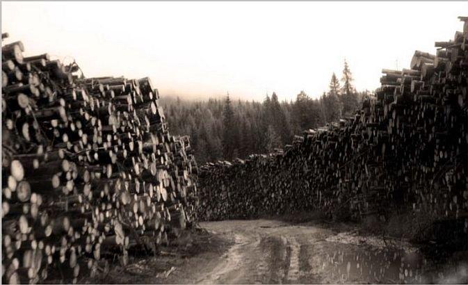 România îşi taie pădurile şi le trimite la export. Le dăm străinilor 33 de milioane de TONE de lemn pe an