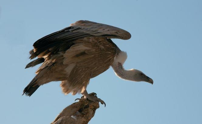 O alpinistă franceză a fost DEVORATĂ de vulturi