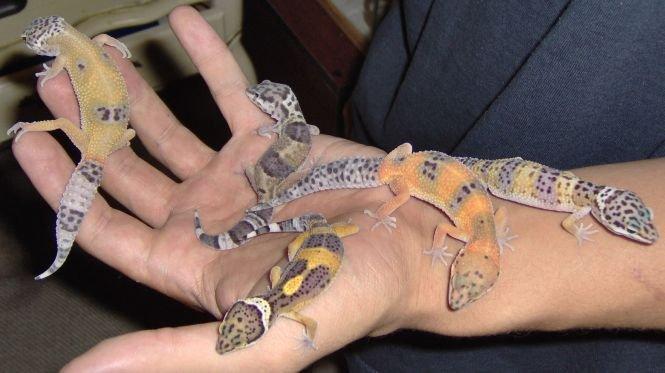 O capsulă cu şoareci, şerpi şi melci s-a întors pe Pământ, dupa o lungă şedere în spaţiu