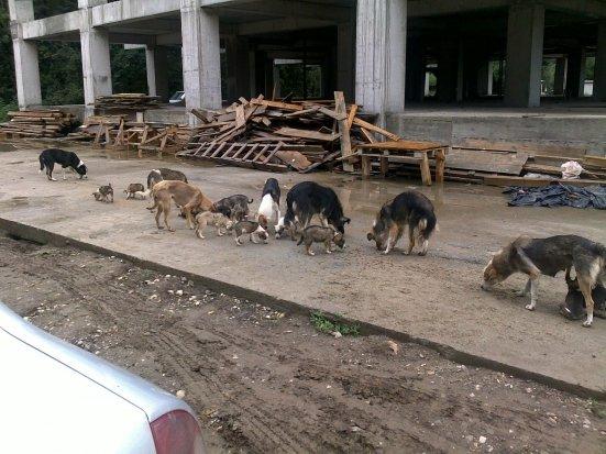 Onţanu, după ce un copil a fost sfâşiat de maidanezi: Primăria sectorului 2 nu are atribuţii în strângerea câinilor vagabonzi
