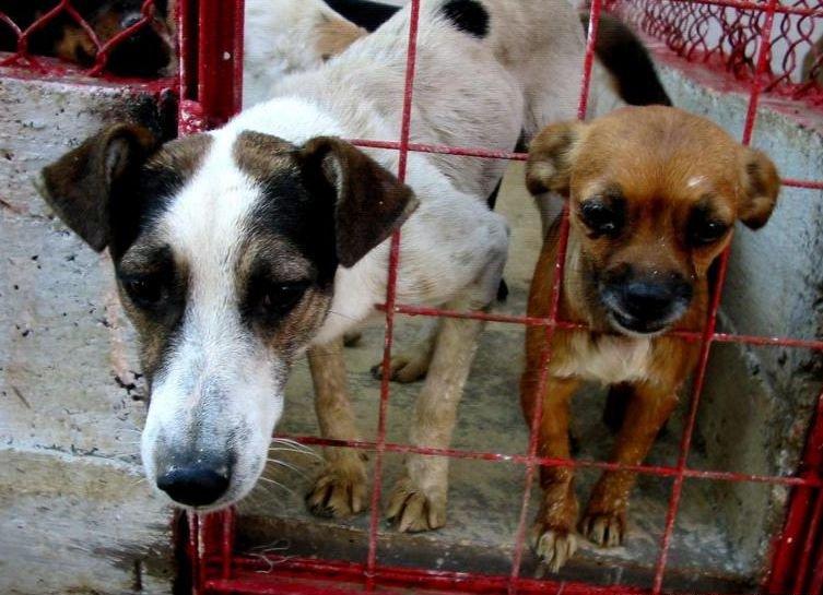 """Protest la Universitate faţă de eutanasierea câinilor maidanezi: """"Copiii iubesc maidanezii. Alegeţi viaţa"""""""
