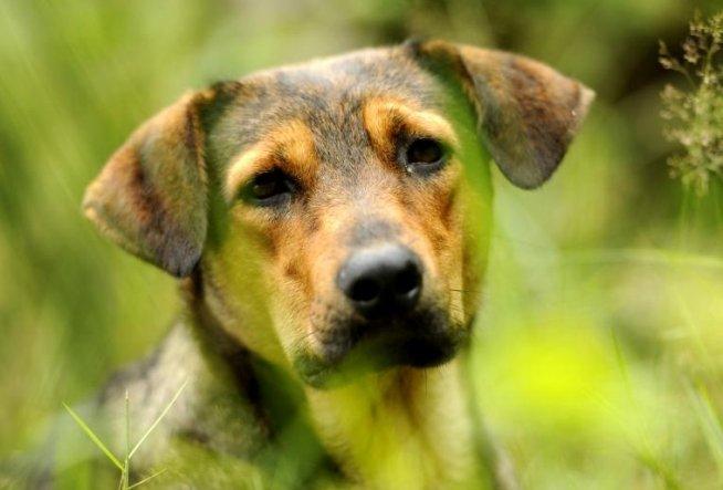 Protest pentru problema câinilor comunitari, în Parcul Izvor. Peste 300 de persoane participă