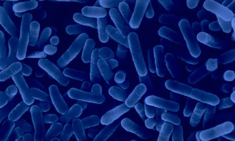 Este alertă epidemiologică în acest oraş. Bacteria care provoacă boala vine din staţia de EPURARE a oraşului