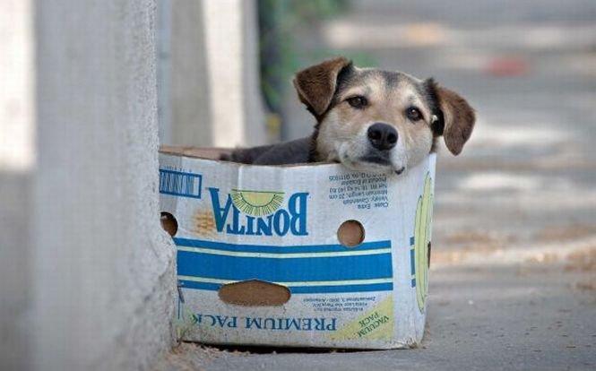 Locuitorii din sectorul 4 al Capitalei vor putea ţine câte un câine lângă fiecare bloc