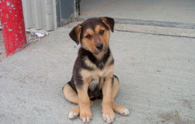 Legea privind eutanasierea câinilor maidanezi, CONTESTATĂ la Curtea Constituţională. Sesizarea va fi discutată pe 25 septembrie