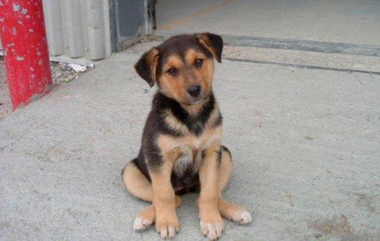 ASPA: Procurorii au ridicat fişele câinilor din adăpostul Mihăileşti, adopţiile au fost suspendate