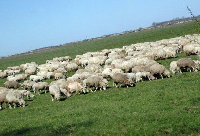IMPRUDENŢA unui cioban era să se termine într-o tragedie