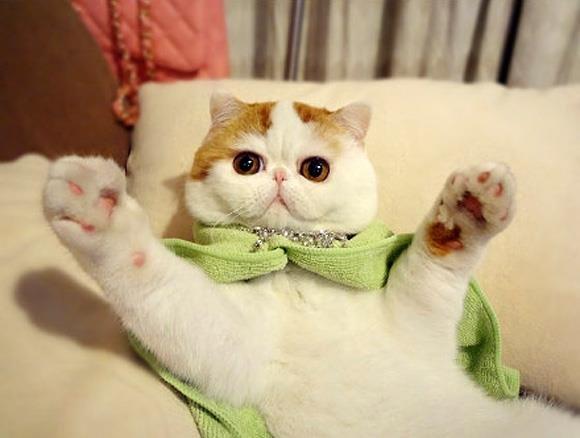 O pisică adorabilă cucereşte mapamanodul. Ea e Snoopy