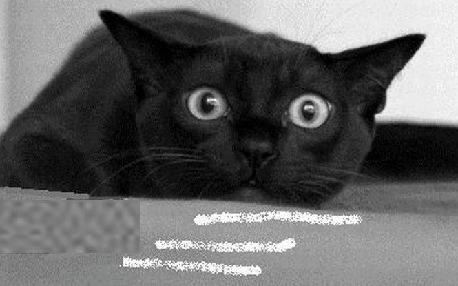 O pisică, folosită pentru a introduce droguri într-o închisoare