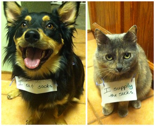Rivalitatea dintre pisici şi câini - un adevăr doar în desene animate