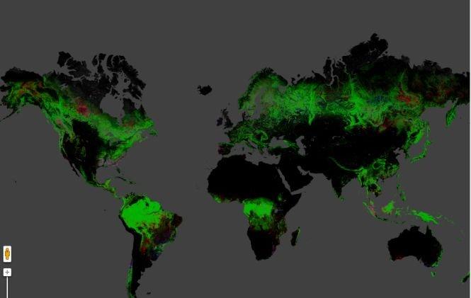 Imaginile Care Arată Scăderea Alarmantă A Zonelor Impădurite Din
