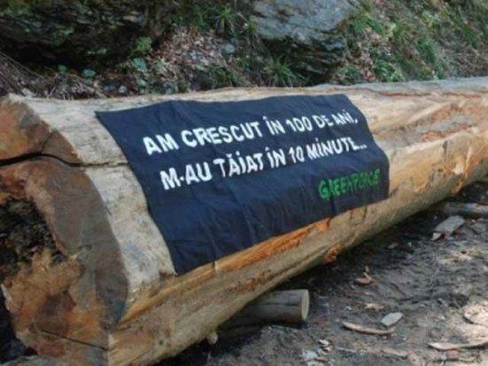 În România se taie peste 3 hectare de pădure la fiecare oră
