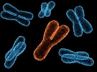 STUDIU. Bărbaţii ar putea fi fertili şi fără cromozomul Y