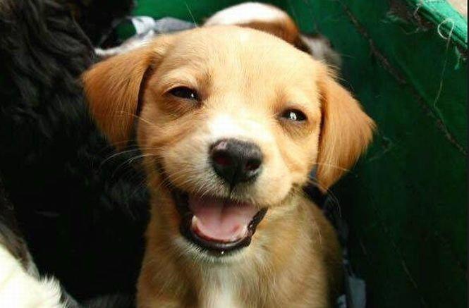 Intră în vigoare noua legislaţie privind identificarea câinilor cu stăpân. Până la ce dată trebuie microcipate animalele