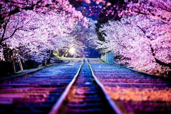 """Fotografii de o frumuseţe ireală. """"Au înflorit cireşii în Japonia"""""""