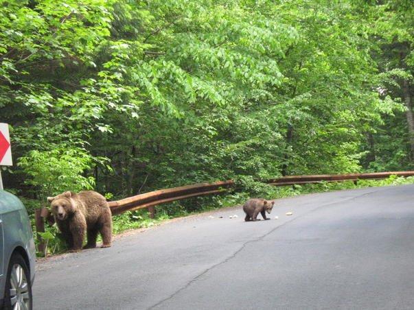 """""""Pentru că... automobile!"""" Am descoperit de ce nu avem autostrăzi în România. Din cauza cuiburilor de berze, a peşterilor de lilieci şi a urşilor gunoieri"""