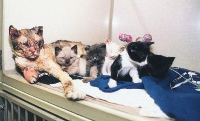 O pisică a intrat de 5 ori într-o clădire incendiată pentru a-şi salva pisoii
