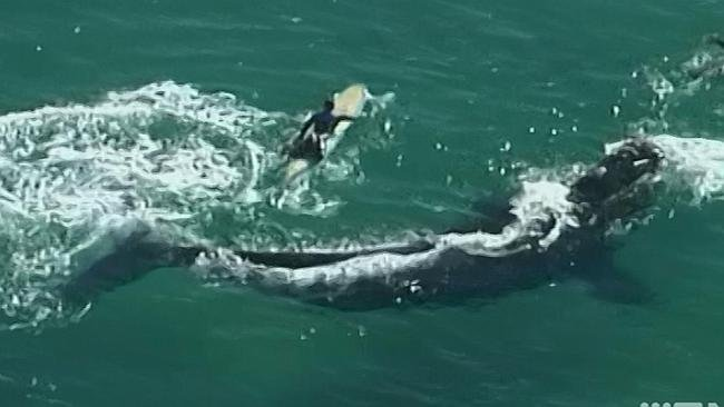 Întâlnire de gradul 3 la câţiva metri de mal. Mai mulţi surferi au dat nas în nas cu o balenă. Imaginile, filmate din elicopter