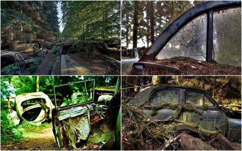 """Imaginea inexplicabilă dintr-o pădure belgiană. I se spune """"ambuteiajul fantomelor"""". Cum au ajuns aceste maşini aici"""
