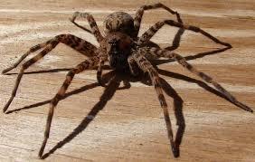 Viaţa bate filmul! A vrut să omoare un păianjen și a dat foc casei