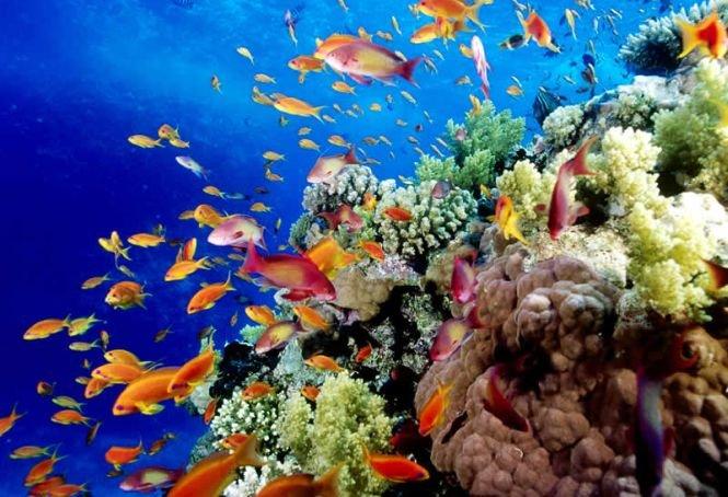 """Marea Barieră de Corali, aproape de a deveni """"GROAPĂ de GUNOI"""". Avertismentul, de la Fondul Mondial pentru Natură"""