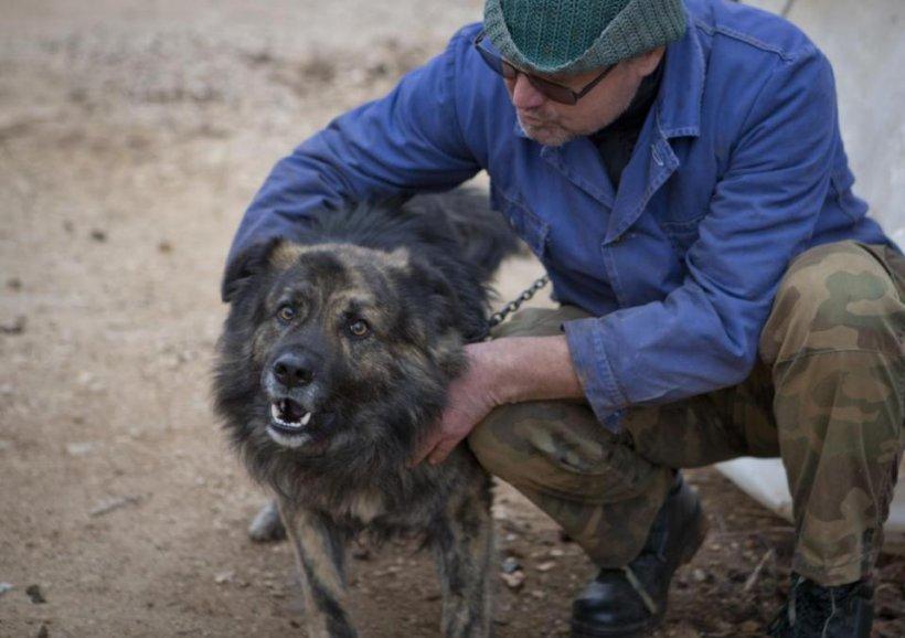 Un tribunal din Croaţia i-a interzis unui câine să mai latre noaptea. Ce amendă riscă stăpânul patrupedului