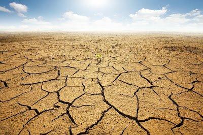 Omenirea ar putea rămâne fără hrană. Încălzirea globală, principalul duşman