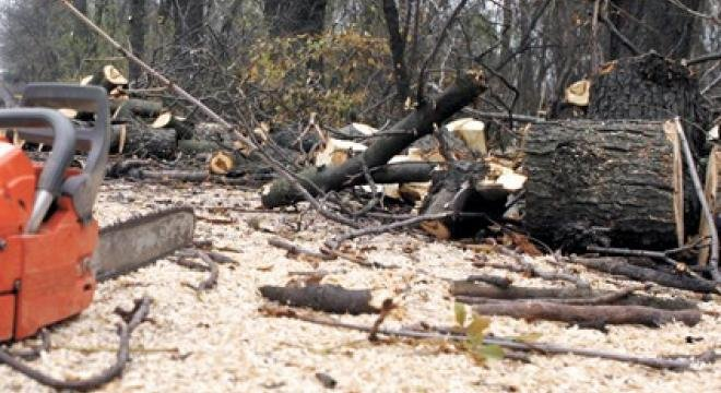 Angajaţii Direcţiei Silvice Gorj, trimişi în judecată după ce au tăiat o pădure din greşeală