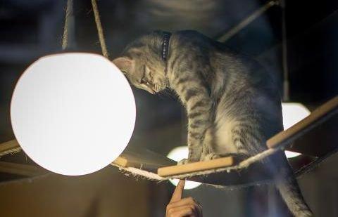 Cea mai nouă idee venită direct din Silicon Valley: Închirierea pisicilor