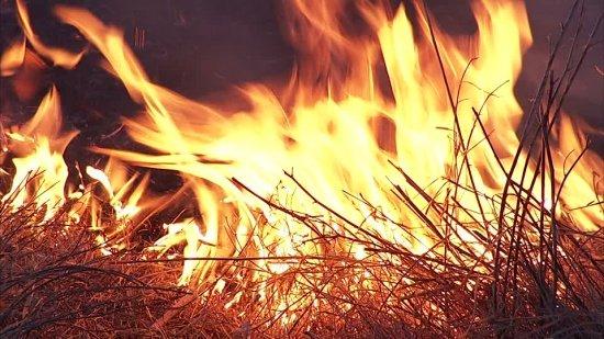 Incendiile de vegetaţie fac prăpăd în mai multe ţări din Europa. Mii de hectare au fost făcute scrum