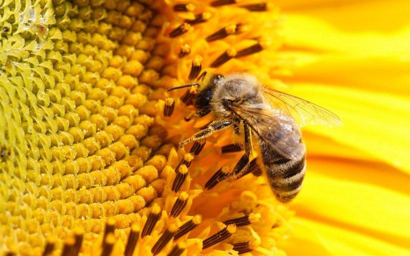 Tânâr de 23 de ani, ucis de albine