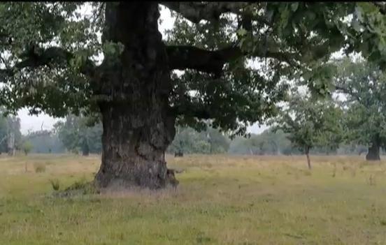 Vedere de la ţară. Dobrovăţ, satul stejarilor lui Ştefan cel Mare
