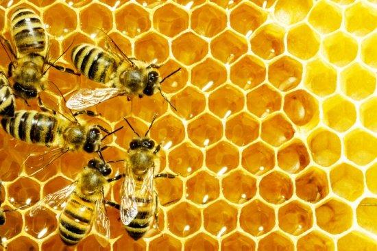 Insectele sunt hrana viitorului. Ce spun experţii în nutriţie
