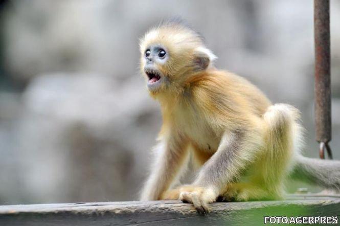 """""""Planeta maimuţelor"""", caz real. Cum au omorât primatele un călugăr"""