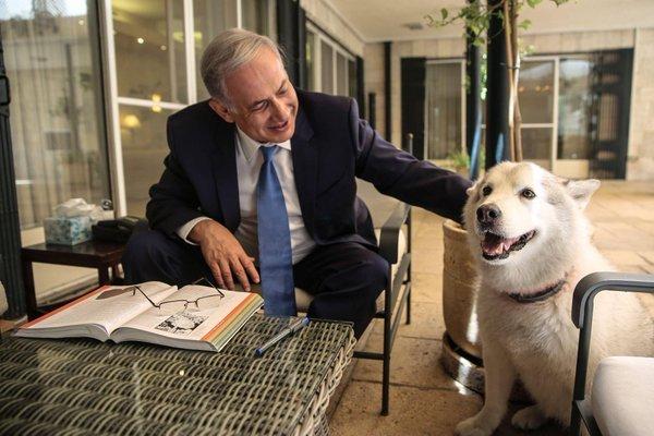 Câinele lui Netanyahu şi-a înfipt colţii în doi invitaţi de Hanuka