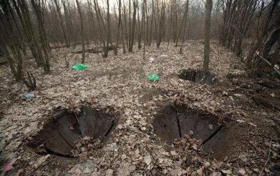 Raport halucinant: În România nu există defrișări