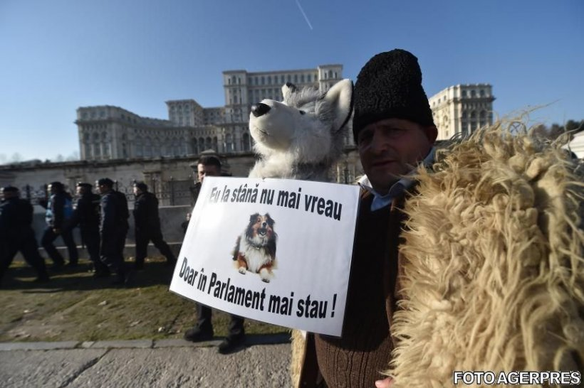 Amenzi pentru oierii care au făcut scandal la protestul din fața Parlamentului