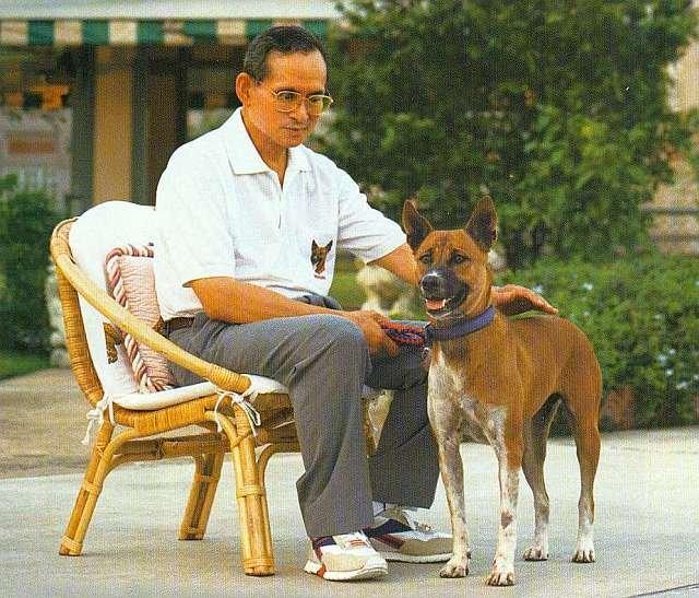 Internaut urmărit în justiţie în Thailanda pentru lipsă de respect faţă de câinele regelui