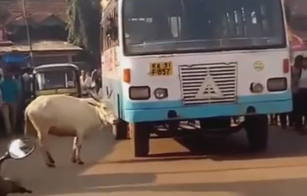 În fiecare zi, această vacă revine în acelaşi loc şi face un gest cutremurător - VIDEO