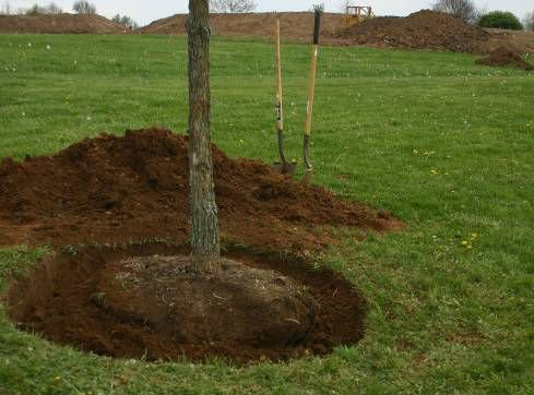 (P) Dăruiește sănătate: Plantează un copac fără efort; este cel mai bun dar care îl poți face pentru tine și cei dragi