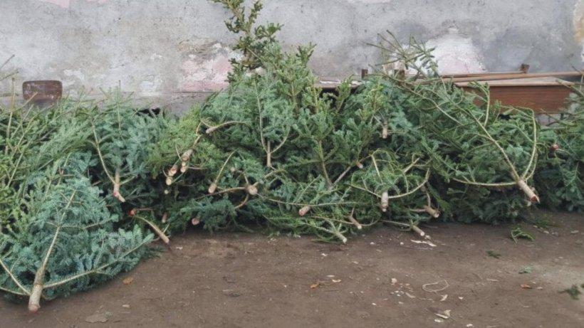 Brazi tăiați și abandonați pe străzile din Cluj