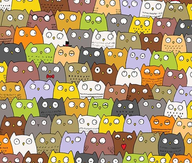 Provocarea continuă! Cât de repede găsești pisica ascunsă între aceste bufnițe adorabile!