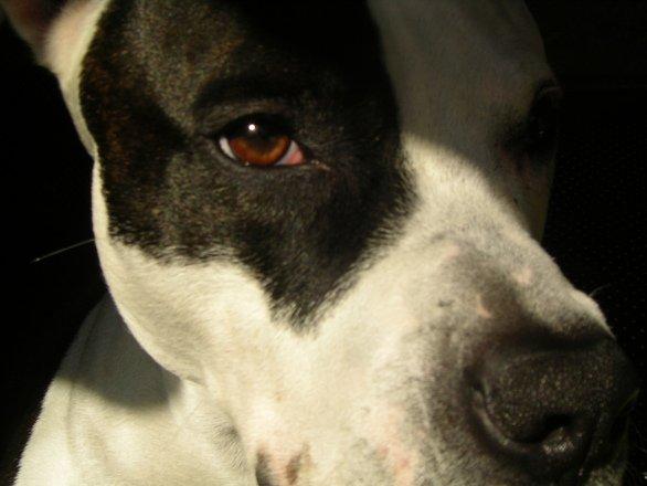 Operațiune spectaculoasă. Câini salvați cu elicopterul. Riscau să devină hrană pentru crocodili