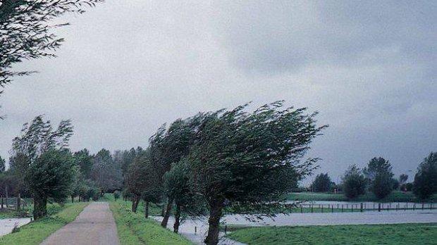 Cod galben de vânt în Tulcea