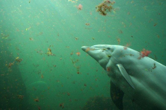 Părintele Dabija a intrat în Delfinariu. Ce au făcut mamiferele marine când preotul s-a apropiat de ele