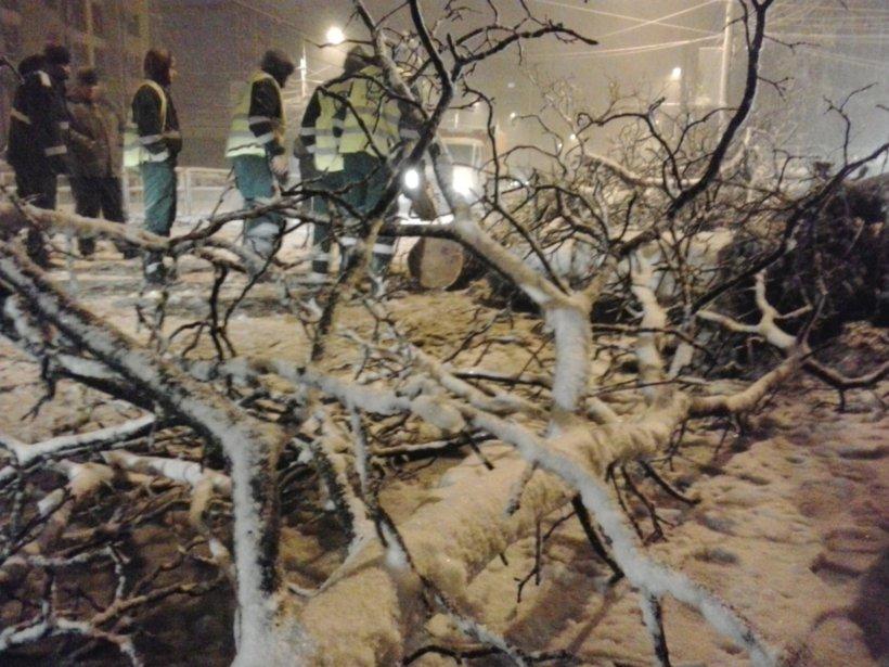 FOTO. Copac căzut pe strada Turda, din Capitală